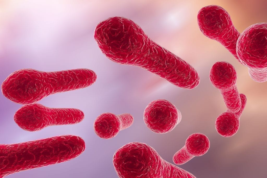 de alvorlige sygdomsbakterier Clostridium difficile i microskop