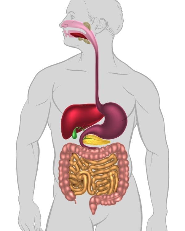 mouth-esophagus-stomach-rectum-uk